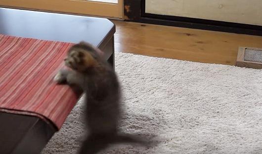 テーブルの上のおもちゃ目がけて精一杯のジャンプ!するもあえなく落下の猫ちゃん