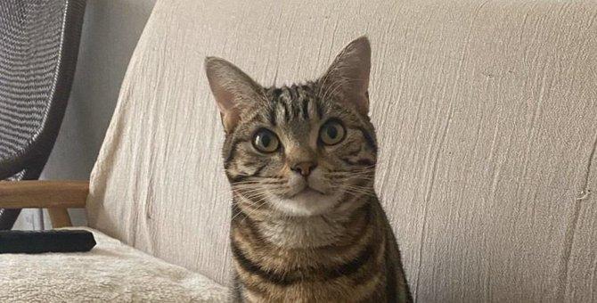 猫のかわいい表情4選