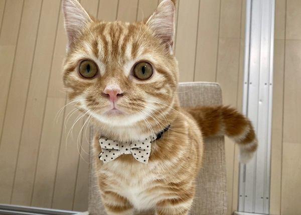 猫の性格はどうやって決まる?それぞれ性格が違うのはなぜ?