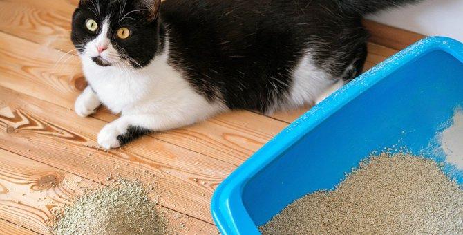 『猫トイレ』の掃除をさぼると起こるトラブル4つと対策