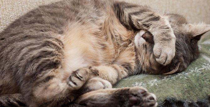 猫の目の周りが赤いのはなぜ?原因や病気、治療や予防法まで