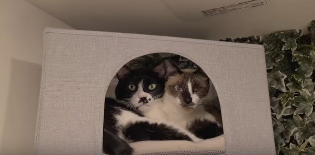 保護猫ピチのその後!先住猫3匹との新しい暮らしの様子は?