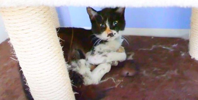 強運のサバイバー猫・ポキ!退院後に始まった家猫修行の行方は?