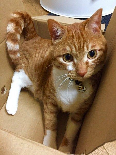 猫はどうして『シマシマ』になるの?