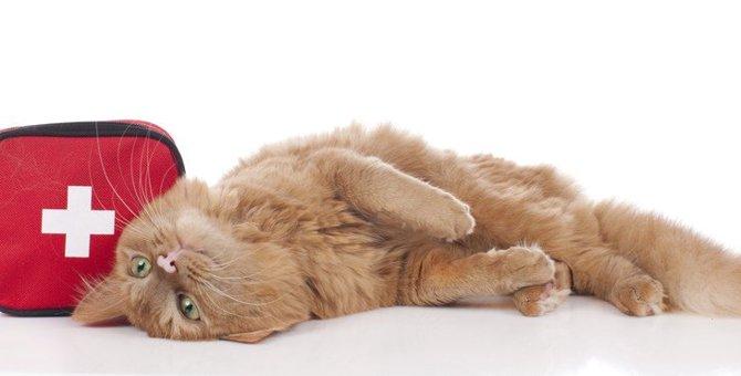 猫が『頭をぶつけた』ときに注意すべきこと2つ