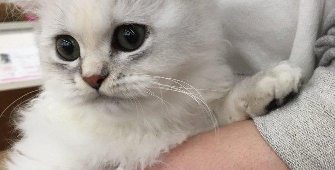 片肺が機能しない『無気肺』愛猫ミルクとの生活で伝えたい事