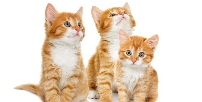 生後5ヶ月の子猫の育て方とは