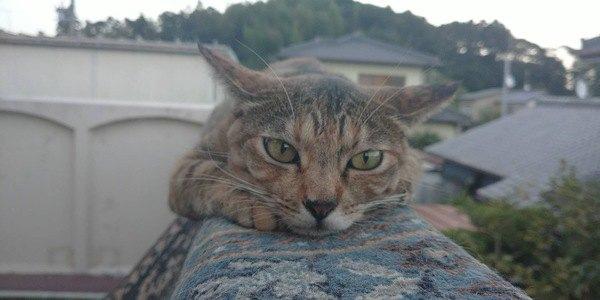 猫の心を落ち着かせる方法4つ