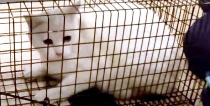 虐待に耐えて暮らす2匹の猫…通報を受けて緊急救出へ!