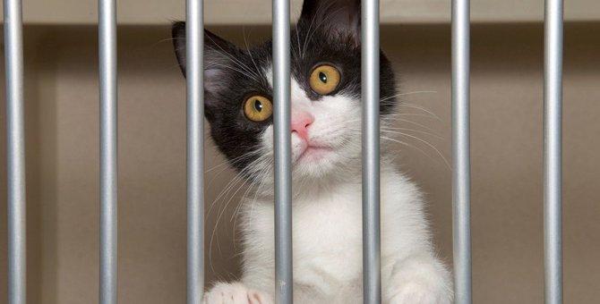 売れ残った猫の行き先は?ペットショップや繁殖業者の現状