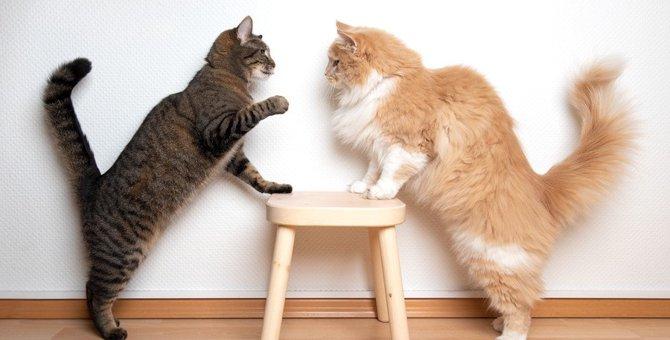 猫が毛を逆立てているときの心理5つ