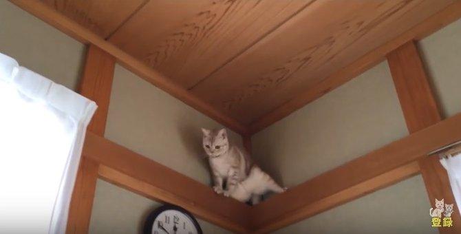 降りれにゃーい!!焦りまくる猫が可愛い♡