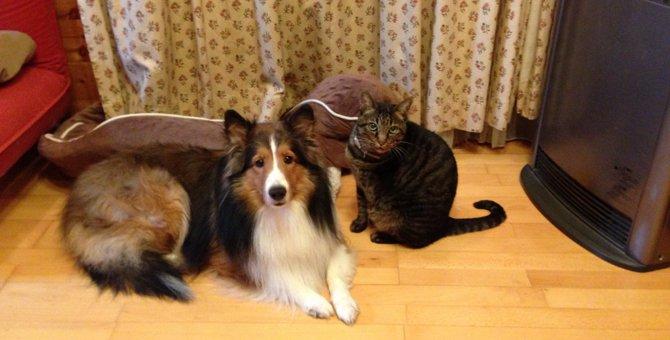 犬好きさんが猫を迎えるときは要注意!犬と猫の違い6つを確認しよう!