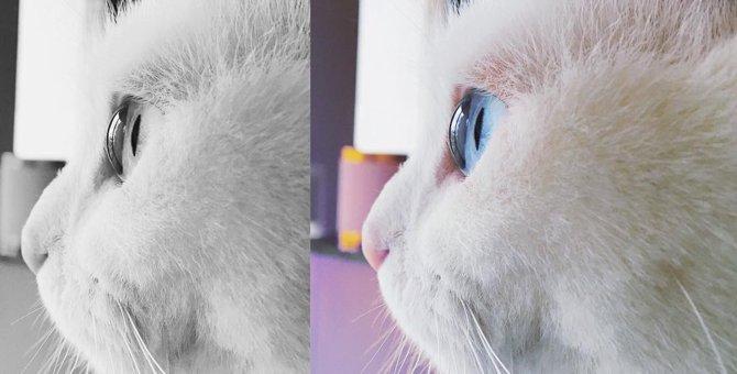 鈴木えみは猫にメロメロ?名前や種類、エピソードを知りたい!