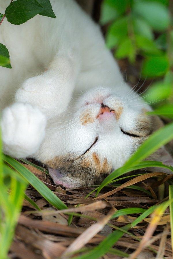 愛猫の気持ちが知りたい!7つの仕草でわかる猫の気持ち