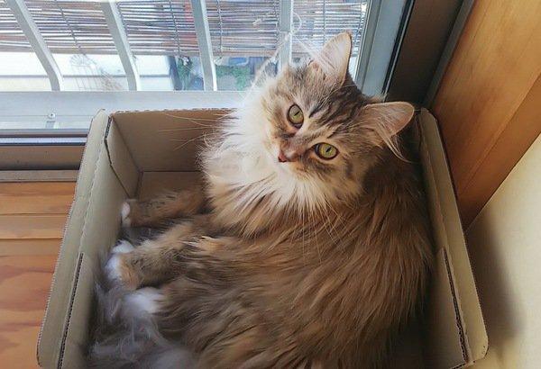 猫がいつも外を見ている6つの理由