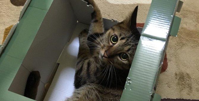 やんちゃな猫が落ち着く年齢はいつ頃?