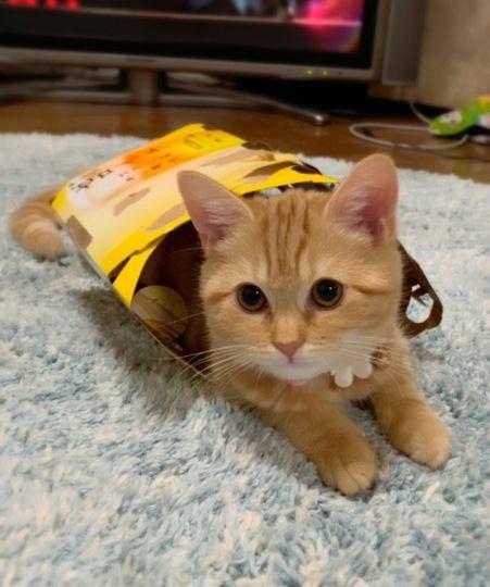 猫が入らずにはいられない「箱」3選