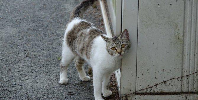 スプレーだけじゃない!猫の『マーキング行動』3つと対策