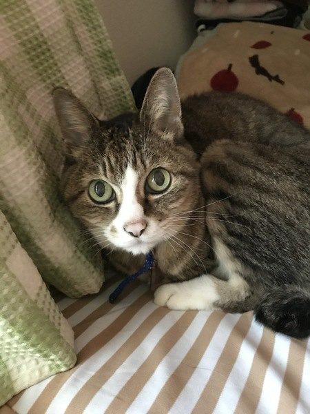 猫の「老衰」で起きることと対策4つ