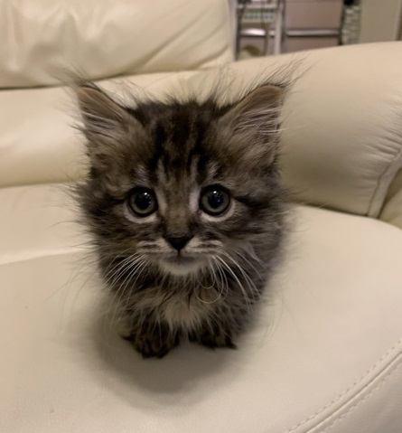 猫が初対面の相手によくする行動3つ