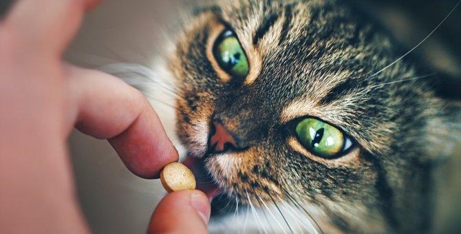 猫用整腸剤の効果や種類、選び方について