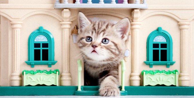 猫をお迎えした時にやってはいけない9つの事