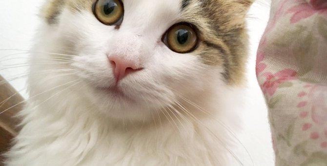 猫の噛みつき癖とその解決方法について