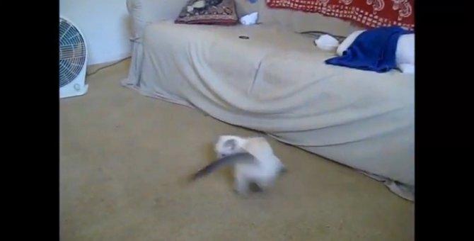 そんなに回って大丈夫?しっぽを追いかけてクルクル回る猫ちゃん