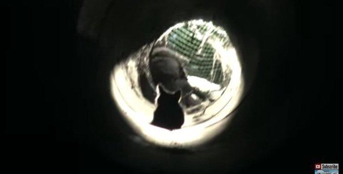 地下の排水溝からレスキューされた子猫ちゃん。慌てず騒がず堂々と!