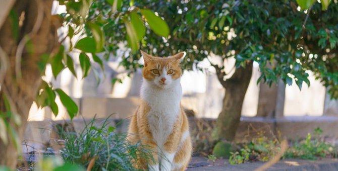 「ねこもに」とは?猫の迷子防止になるアイテムとサービス内容について