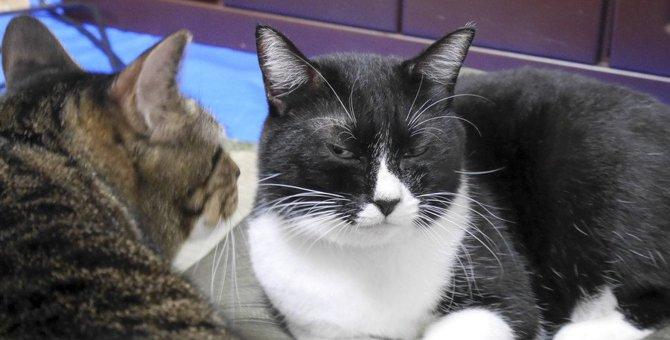 猫の気持ちが冷める『NG行為』5つ