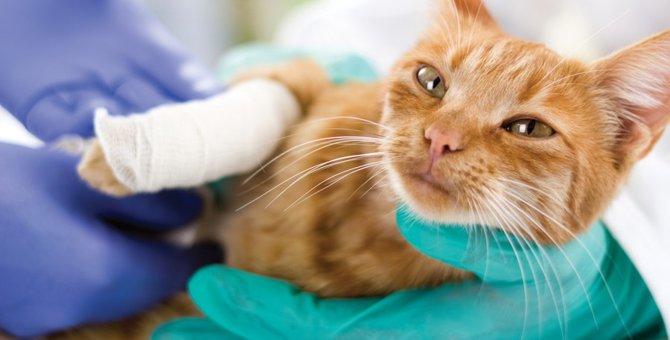 猫の怪我はどう対処する?症状別に知ってこう!