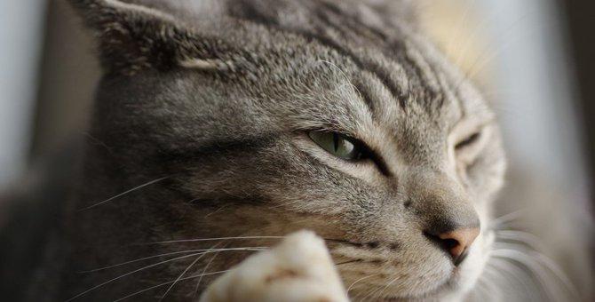 猫が目をしょぼしょぼさせる8つの理由