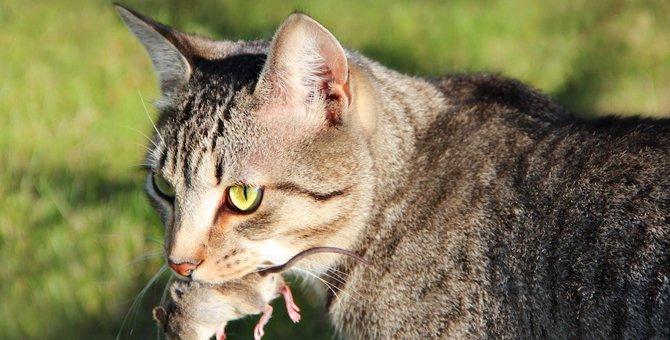 猫がお土産で虫や動物の死骸を持ってきた時の対処法