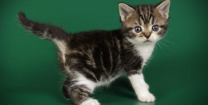 猫の『しっぽ』は何のためにある?重要な役割4つや注意点を解説