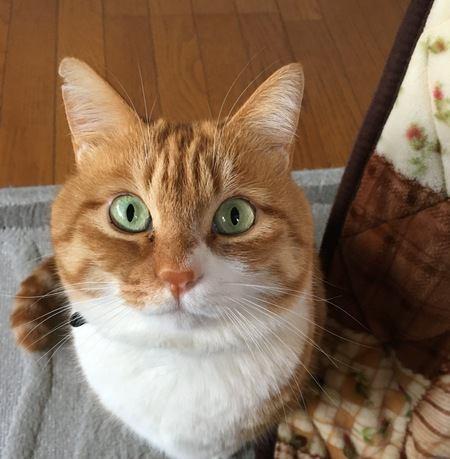 猫が飼い主に伝えたいと思っている『5つのこと』