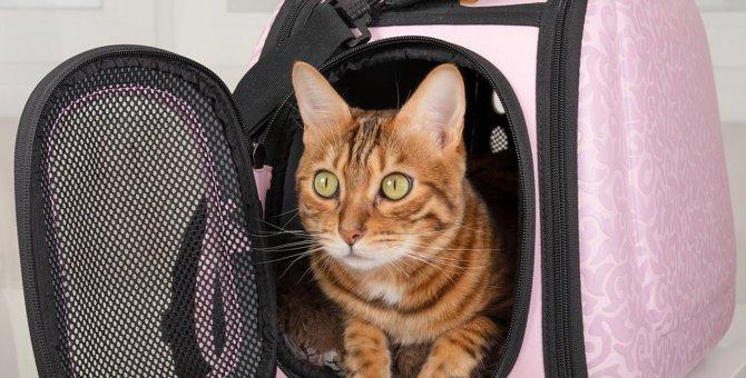 猫の『キャリー移動』で起こりやすい怪我・事故3つ