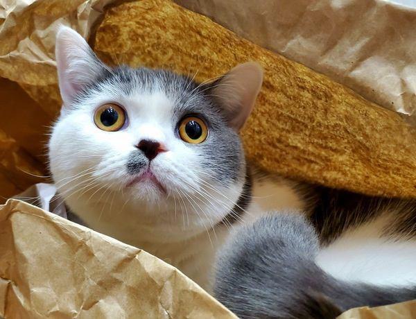 どこいった?猫が隠れて出てこないときの心理3つ