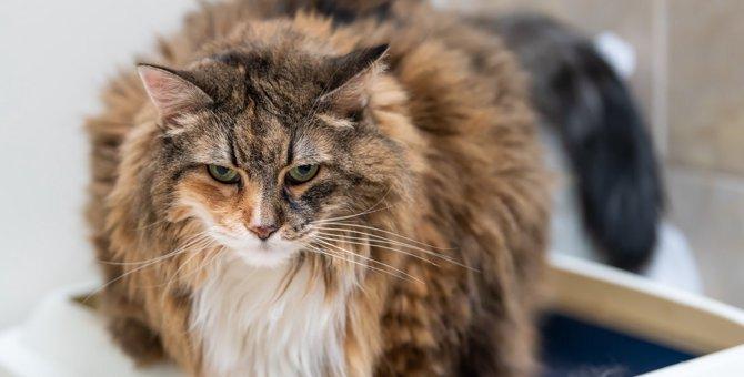 老猫を『介護』する時に絶対しちゃダメなこと3つ