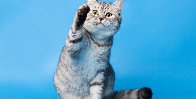 猫の足が持つそれぞれの役割と機能