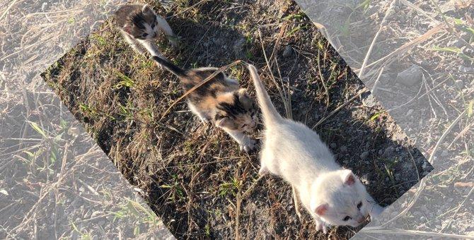 命の恩人について行く3匹の子猫が話題!行進は幸せの道に続いていた