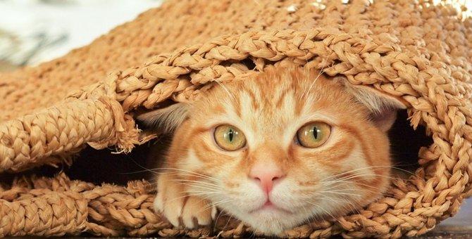 茶トラの性格とは 人懐っこい甘えん坊猫ちゃん!