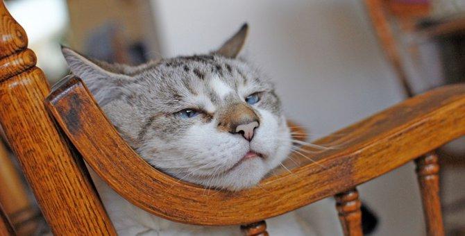 15歳の猫に現れる9つの特徴とは