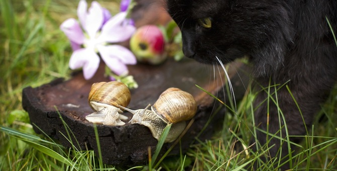 猫が病気に!?雨の日はカタツムリやナメクジにご注意!