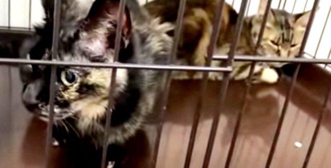 飼育放棄でガリガリになった猫…保護され新たな猫人生を歩む!