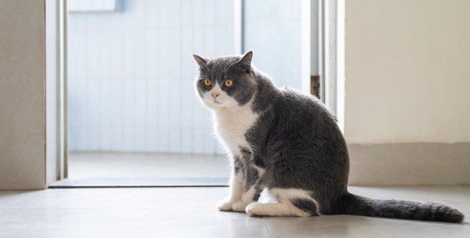 猫が警戒しているときの座り方4つ