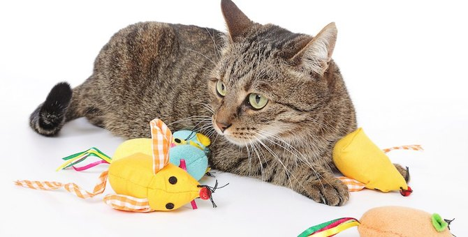 Amazonで人気のある猫のおもちゃ5選!