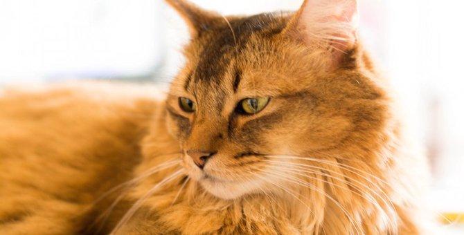 高齢猫が痙攣をおこす4つの原因と対処法