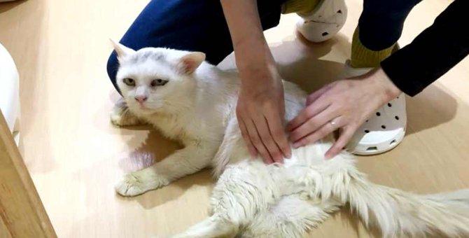 大きなハンデを背負った2匹の猫…困難に思われた未来に光が!